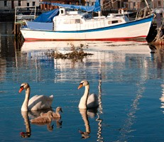 Swans and boat on water